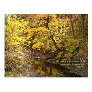 Autumn Splendor III Postcard