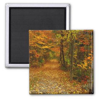 Autumn Splendor Magnet