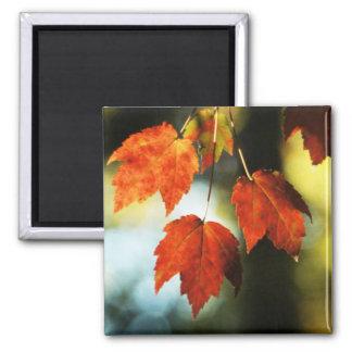 Autumn Splendor Square Magnet