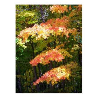 autumn splendor postcard