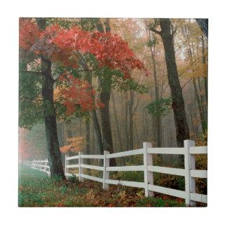 Autumn Splendor Ceramic Tiles