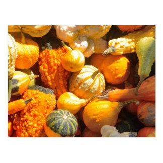 Autumn Squash Postcard