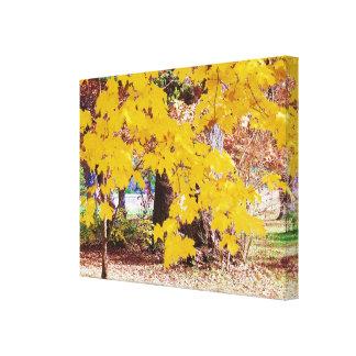 Autumn Sugar Maple Leaves Canvas Prints