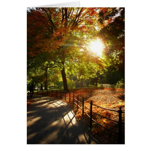 Autumn Sun in Central Park, New York City Greeting Cards