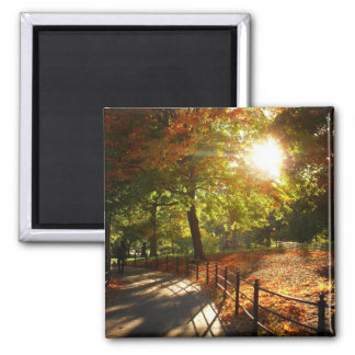 Autumn Sun in Central Park, New York City Square Magnet