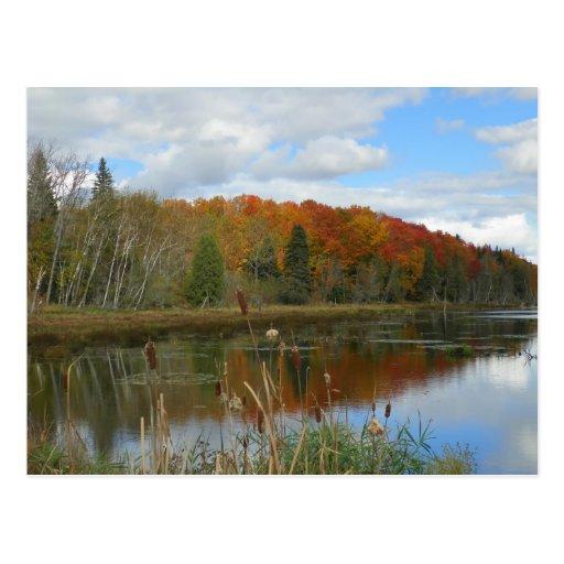 Autumn Swamp Postcards