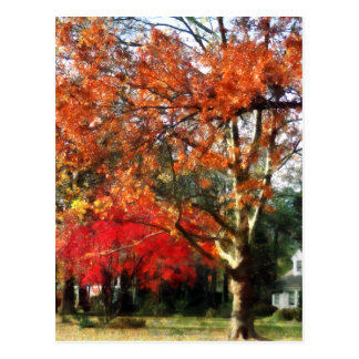 Autumn Sycamore Tree Post Card