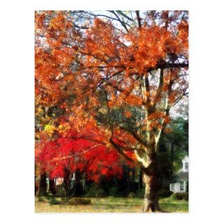 Autumn Sycamore Tree Postcard