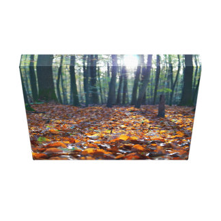 Autumn Themed, A Bed Of Golden Leaves In The Fores Stretched Canvas Prints