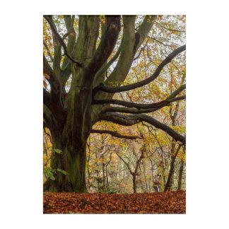 Autumn Tree Acrylic Wall Art