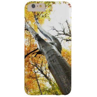 Autumn tree barely there iPhone 6 plus case