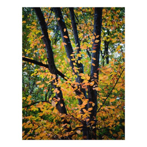 Autumn tree full color flyer