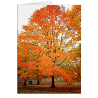 Autumn Tree in Central Park, New York City Card