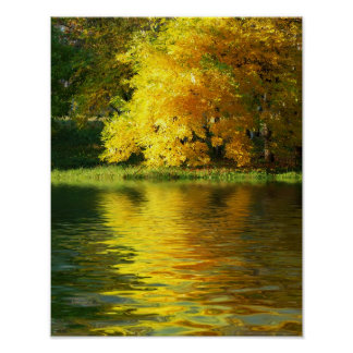 Autumn tree in the forest with reflection poster
