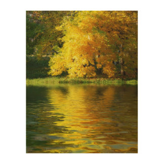 Autumn tree in the forest with reflection wood print