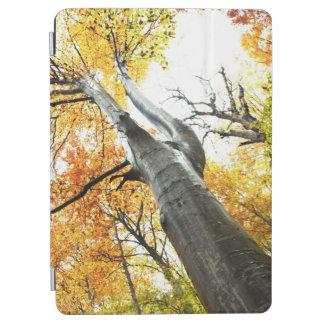 Autumn tree iPad air cover