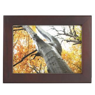 Autumn tree keepsake box