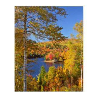 Autumn tree landscape, Maine Acrylic Wall Art
