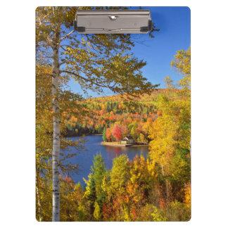 Autumn tree landscape, Maine Clipboard