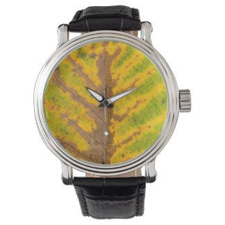 autumn tree leaf texture pattern background nature watch