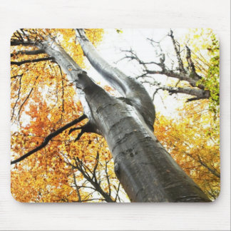 Autumn tree mouse pad