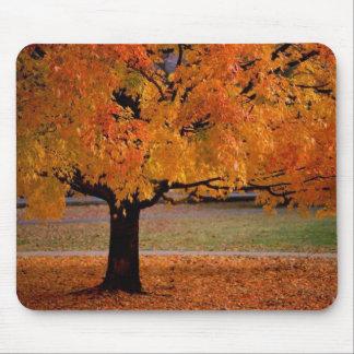 Autumn Tree Mousepad