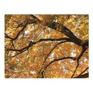 Autumn Tree Postcard