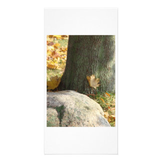 Autumn tree & rock customized photo card
