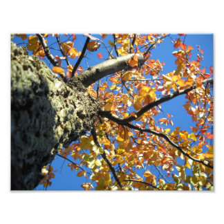 Autumn Tree with Blue Sky Photographic Print