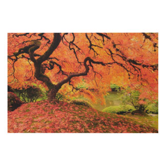 Autumn Tree Wood Canvases