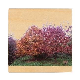 Autumn tree wooden coaster