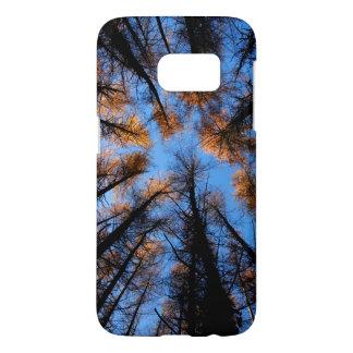 Autumn trees at  sunset