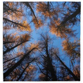 Autumn trees at  sunset napkin
