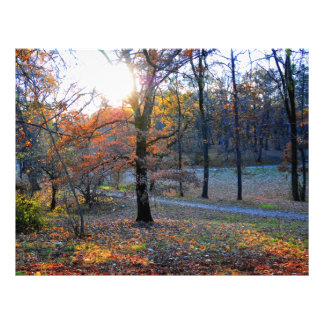 Autumn trees full color flyer