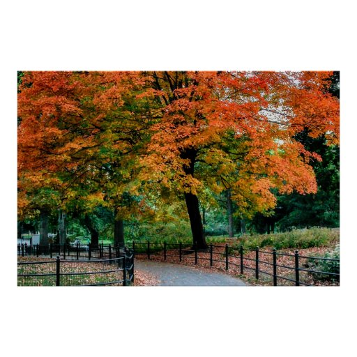 Autumn Trees in Central Park Photo Print