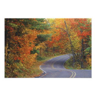 Autumn trees line roadway in Itasca State Park Photo Print
