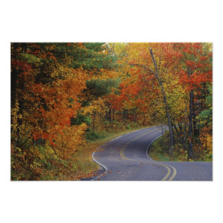 Autumn trees line roadway in Itasca State Park Poster