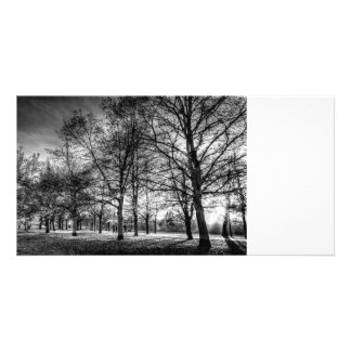 Autumn Trees Personalized Photo Card