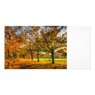 Autumn Trees Picture Card