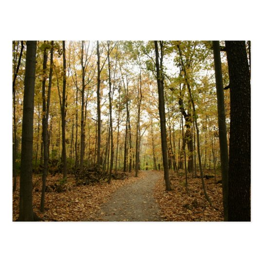 Autumn Trees Postcard