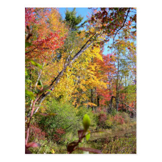 Autumn Trees Postcard