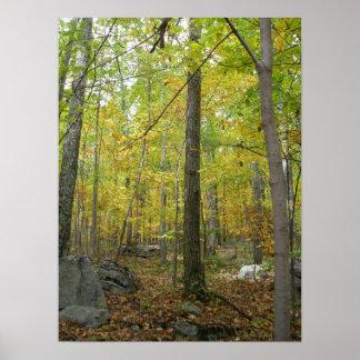 Autumn Trees Print