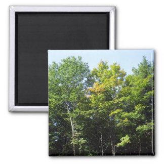 Autumn Trees Square Magnet