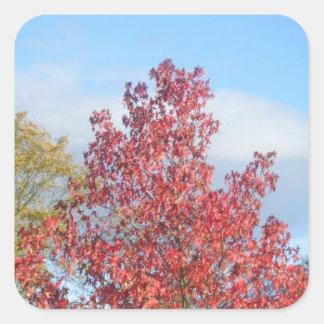Autumn trees square sticker