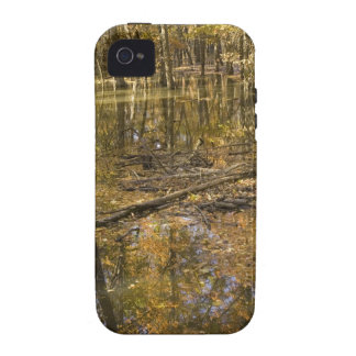 AUTUMN TREES STANDING IN WATER VIBE iPhone 4 CASES