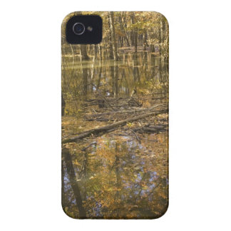 AUTUMN TREES STANDING IN WATER Case-Mate iPhone 4 CASES
