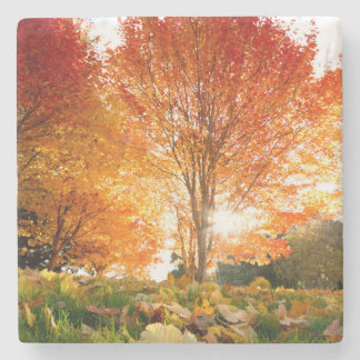 Autumn Trees Stone Beverage Coaster