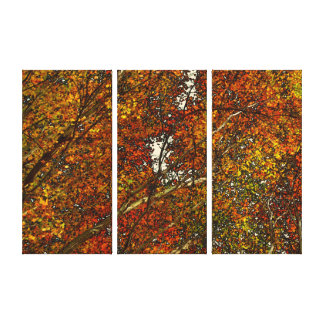 Autumn Trees Stretched Canvas Prints