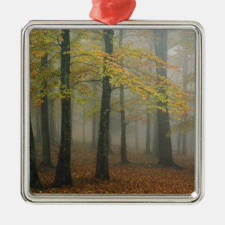 Autumn view of foggy forest, Grandfather 3 Silver-Colored Square Decoration