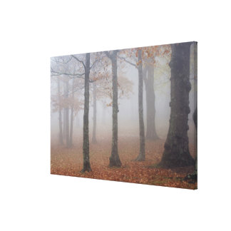 Autumn view of foggy forest, Grandfather Canvas Prints